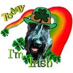 Today I'm Irish Giant Schnauzer
