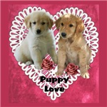 Golden Retriever  Valentines Day