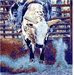 Western Cowboy Rodeo Bull Riding