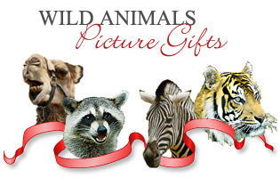<b> ANIMAL PICTURE GIFTS</b>