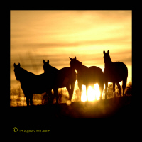 Sunset Horse Silhouettes
