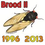 Cicada 1996 Brood II