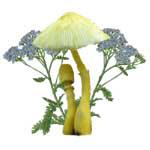 Yellow Mushroom Blue Flower