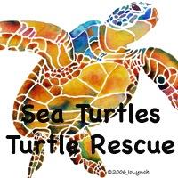 TURTLES, SEA TURTLES, TURTLE GIFTS