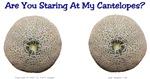 Staring at my Cantelopes?