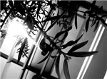 Black and White Leaves and Sun