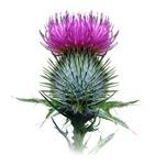 Scottish Designs