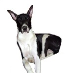 Mantle Great Dane Products