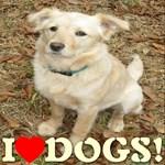 Petporium Dog Fancier Gifts & Apparel