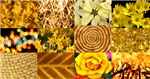 Golden Yellow Photo Collage