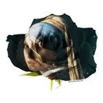 Vermeer Rose