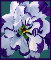 Botanicals / Flowers