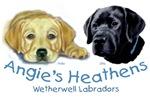 Wetherwell Labradors