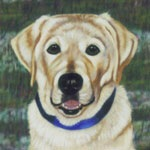 Jake, Yellow Lab