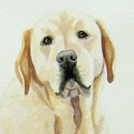 The Look, Yellow Lab