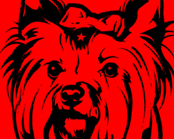 Yorkie Revolution Icon