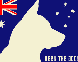 Obey the ACD! Tricolor
