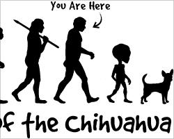 Chihuahua Evolution