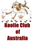 Red Merle on Sheep with Koolie Club of Australia