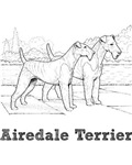 Airedale Terrier Illustration