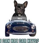 LOL French Bulldog