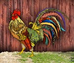 Rooster by a Barn