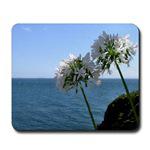 ...Allium...