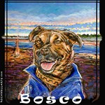 Pit Bull Dog Bosco