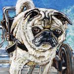Pug Handicapped
