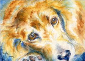 Soulful Dog