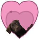 Chocolate Lab Heart Dog