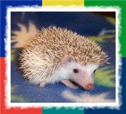 Pinta the Hedgehog