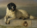 Newfoundland-Landseer Resting by the Shore