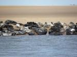 The Seals of Newburgh