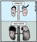 Kidneys Adultneys