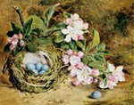 Apple Blossom Bird Nest Vintage Floral