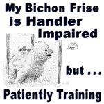 Bichon Frise Agility