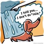 Dachshunds hate rain