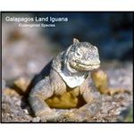 Gulapagos Land Iguana Photo