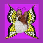 Colorful Papillion
