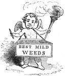 Best Mild Weeds