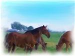 oKLAHOMA WILD hORSES