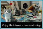 Enjoy the kittens - have a nice day!