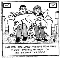Lap Dogs