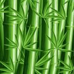 Green Zen Bamboo