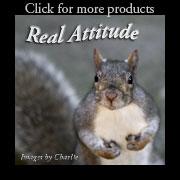 Squirrel with an Attitude