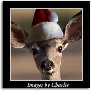Deer Santa Christmas Gifts