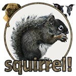 Squirrel and dogs