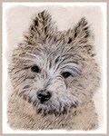 Carin Terrier - Multiple Illustrations