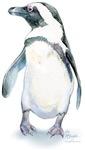 Penguin Personality